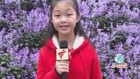 小记者百万葵园踏青赏花