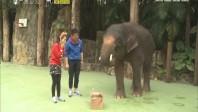 [2017-08-12]动物笑当家:大象真的害怕老鼠吗?
