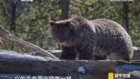 [2017-09-16]寰宇地理:不可能的冒险——寻找超级熊
