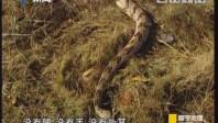 [2018-08-19]寰宇地理:与蛇共舞 望蛇生畏