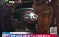 中山:爱猫钻进发动机舱 主任无奈求助消防