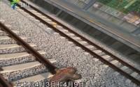 肇庆:风筝一月内两次逼停城轨 安全隐患警钟被敲响