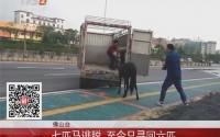 佛山南海桂丹路:马路惊现奔跑黑马 车辆纷纷躲避
