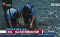 珠海:成功救治搁浅糙齿海豚