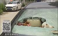 """广州荔湾:小区惊现""""砸车狂魔""""十几小车遭殃"""