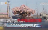 """[HD][2018-04-17]看天下:不会枯萎的樱花树? 乐高砖来""""实现"""""""