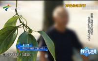 "[HD][2019-07-29]社会纵横:清远 美丽乡村建设 为何成""豆腐渣""工程?"