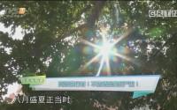 [HD][2019-08-19]馬后炮生活+《消費研究院》:高溫進行時!不防曬后果很嚴重!