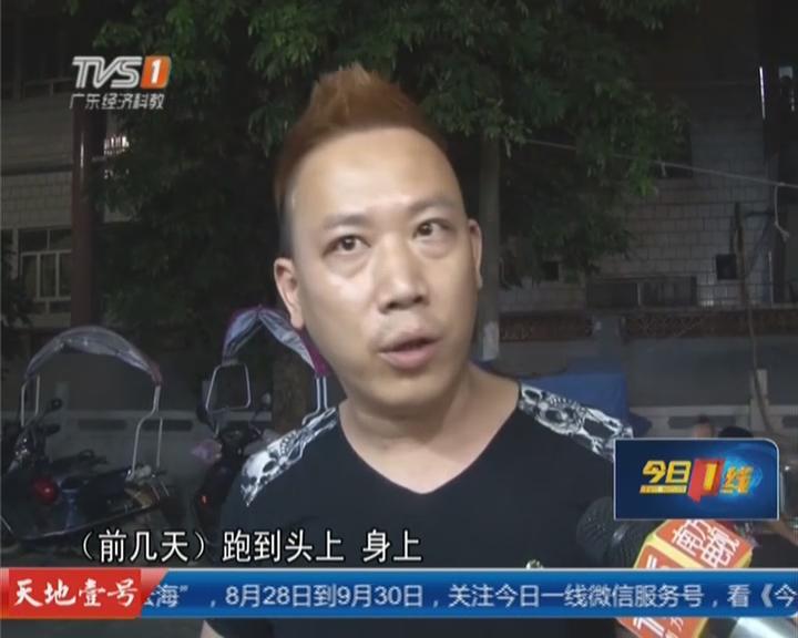 防控登革热:揭阳惠来——路边店蚊虫成灾  街坊心惊