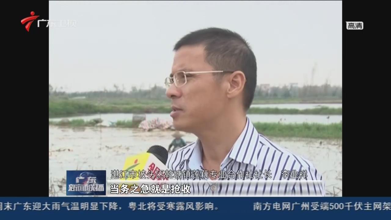 湛江:藕乡群众积极抢收自救