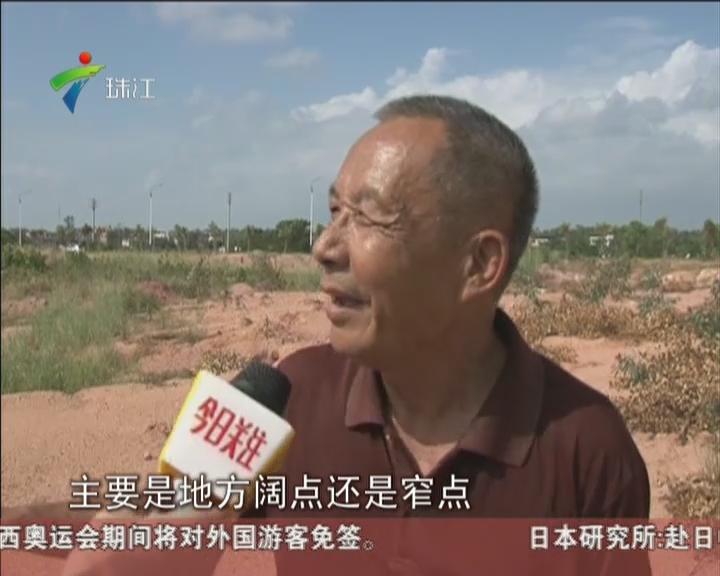 茂名:万棵桉树半夜被砍  村民很痛心