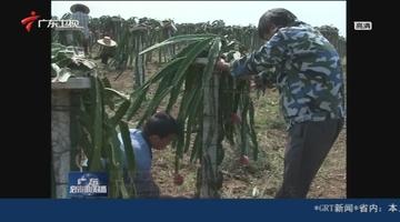湛江:加大冬种投入减轻灾后损失