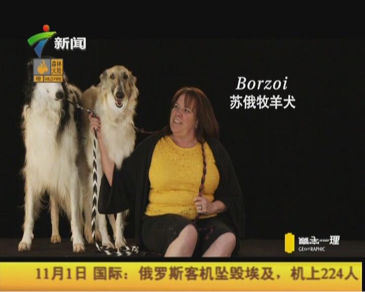 20151101《寰宇地理》(第2927期):人创造了狗