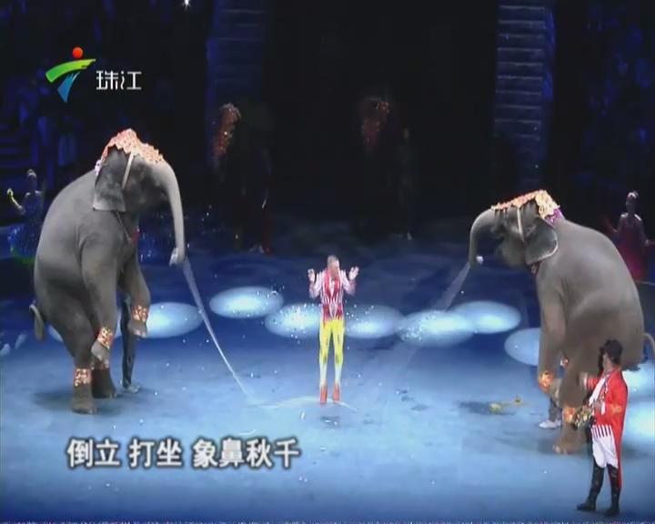 第二届中国国际马戏节在珠海开幕
