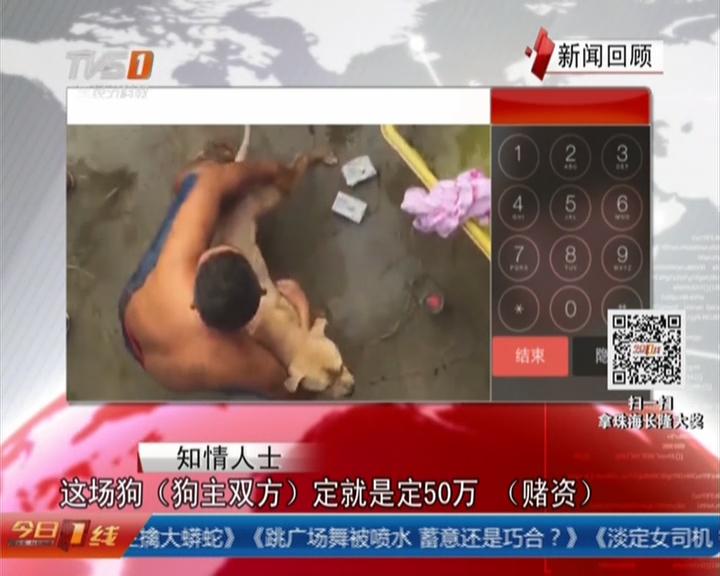 一线独家调查:揭阳——粤东地下斗狗赌博调查