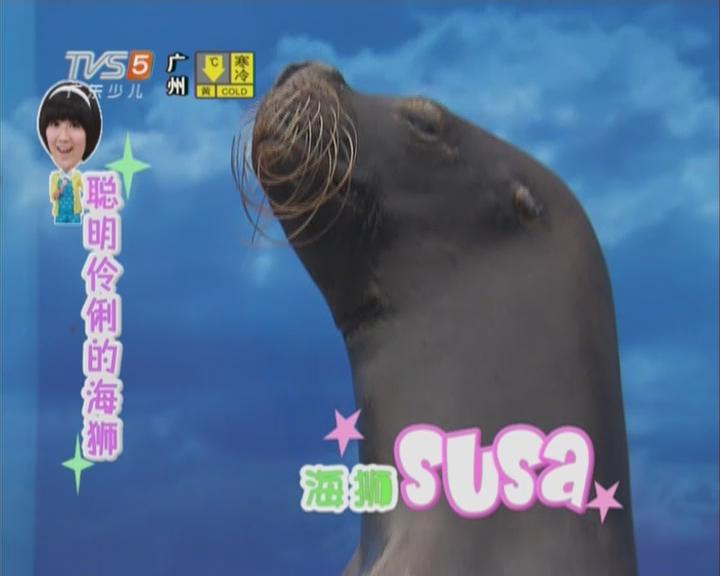 20151226《动物笑当家》:动物小百科——认识海狮
