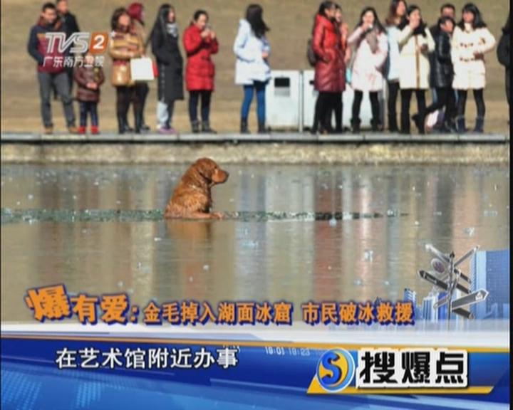 爆有愛:金毛掉入湖面冰窟  市民破冰救援