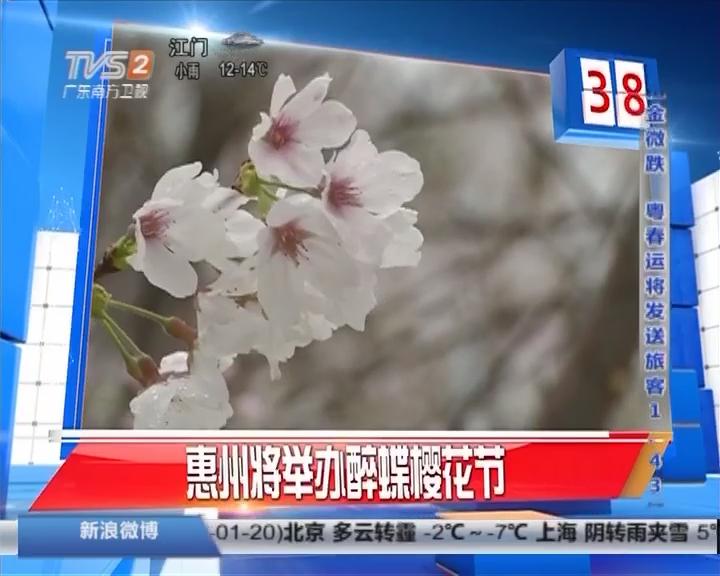 惠州将举办醉蝶樱花节