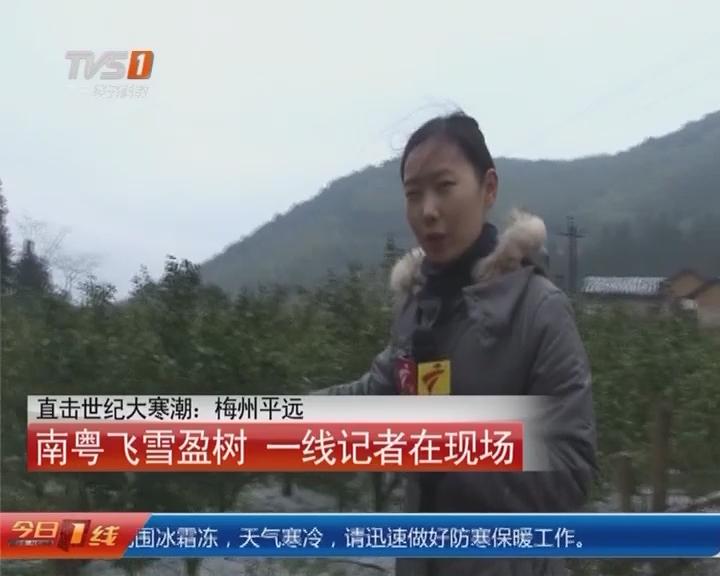 直击世纪大寒潮:梅州平远 南粤飞雪盈树 一线记者在现场