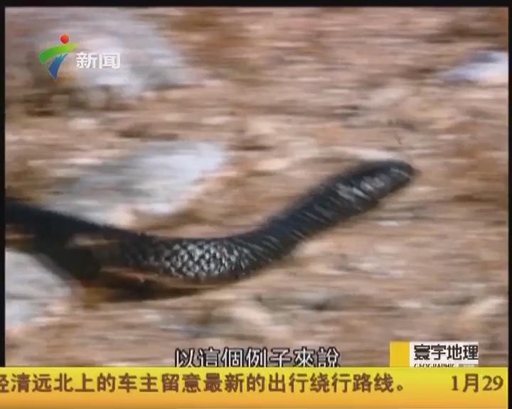 """""""與蛇共舞2:變種虎蛇"""""""