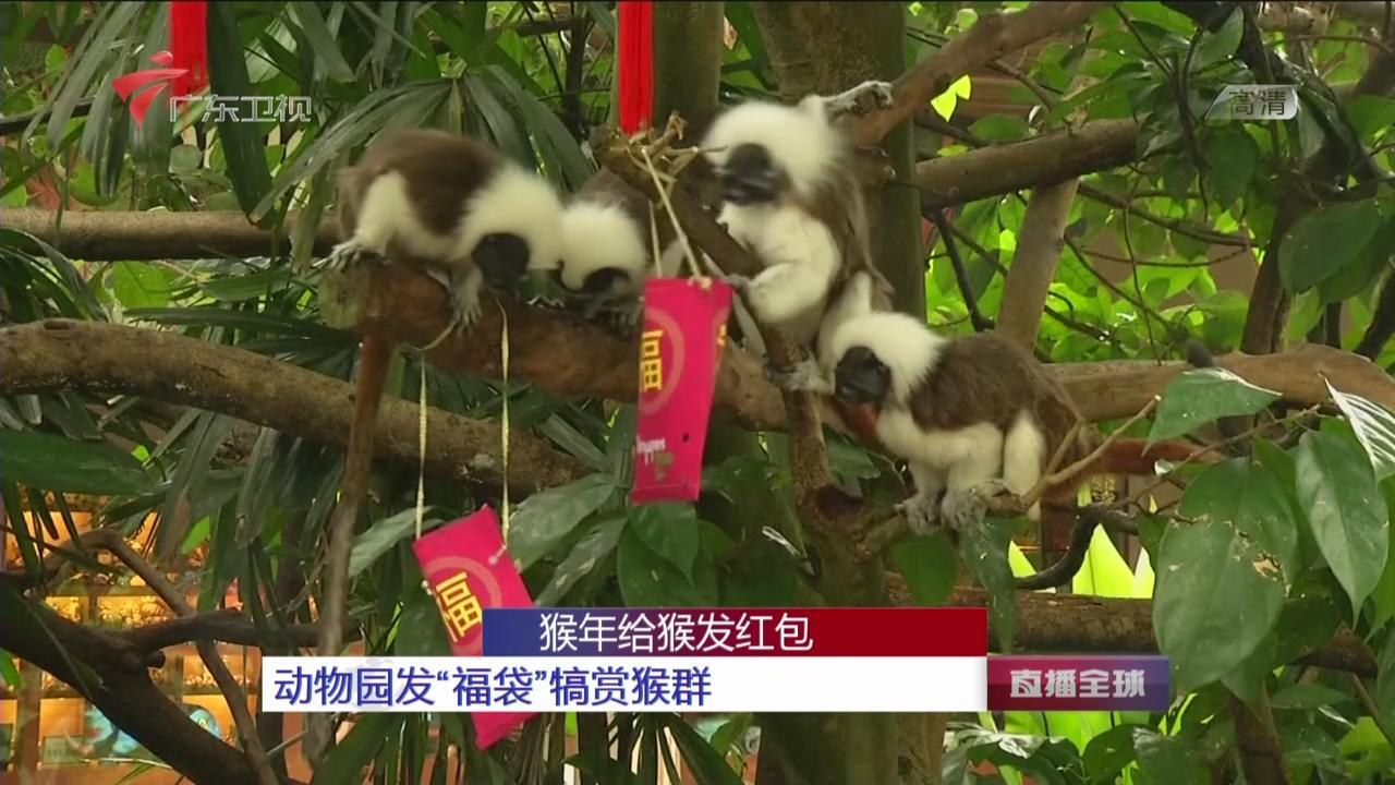 """猴年给猴发红包:动物园发""""福袋""""犒赏猴群"""
