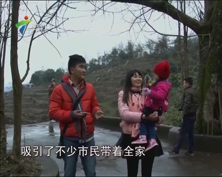 直击河源寒潮:和平冰雨 粤赣顺畅
