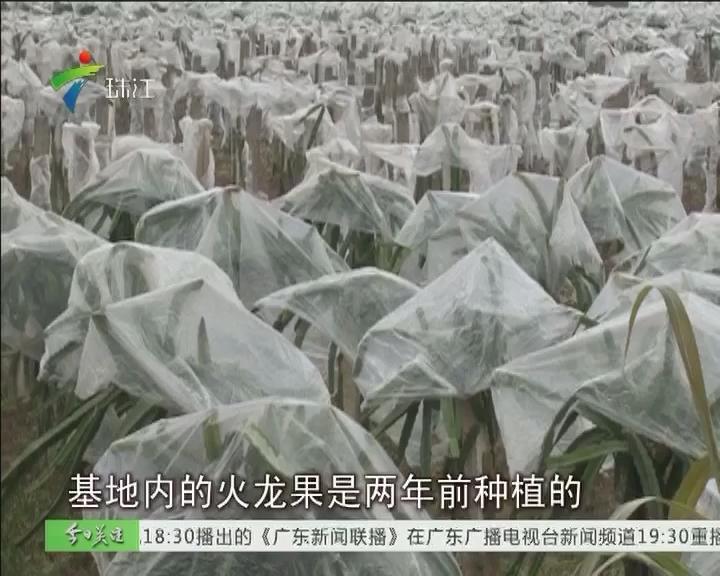 梅州兴宁:低温持续 农业损失扩大