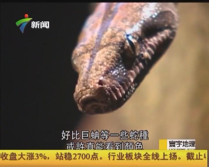 """""""與蛇共舞3:現代泰山"""""""