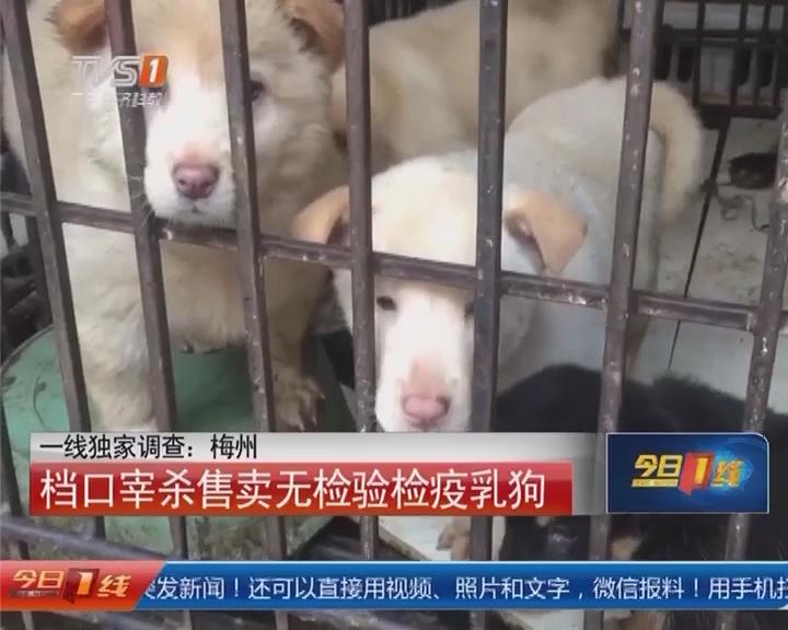 一线独家调查:梅州 档口宰杀售卖无检验检疫乳狗