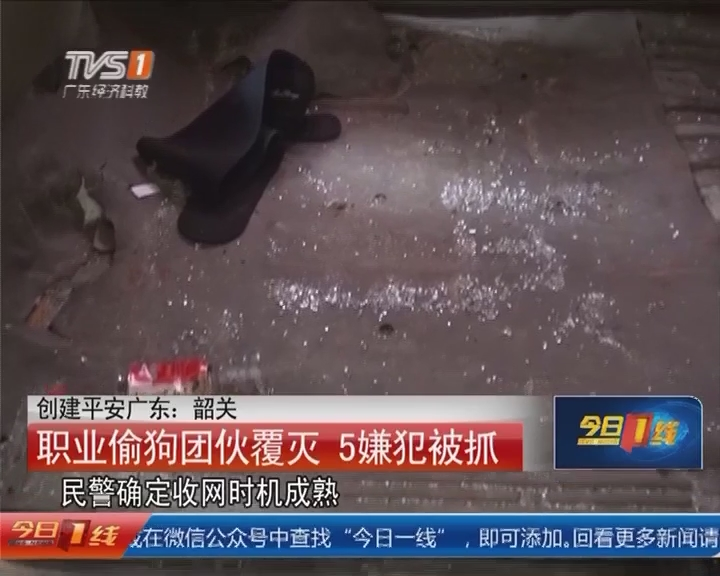 创建平安广东:韶关 职业偷狗团伙覆灭 5嫌犯被抓