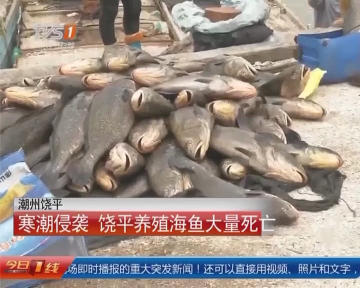 潮州饶平:寒潮侵袭 饶平养殖海鱼大量死亡
