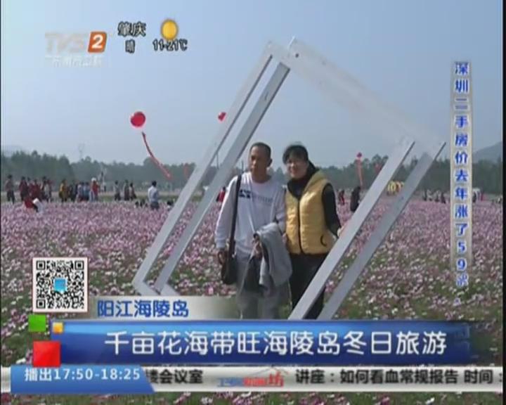 阳江海陵岛:千亩花海带旺海陵岛冬日旅游