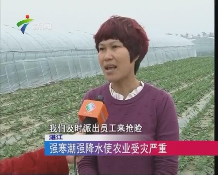 湛江:强寒潮强水使农业受灾严重