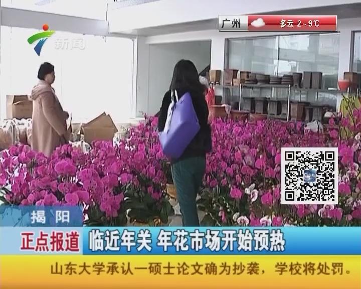 揭阳:临近年关 年花市场开始预热