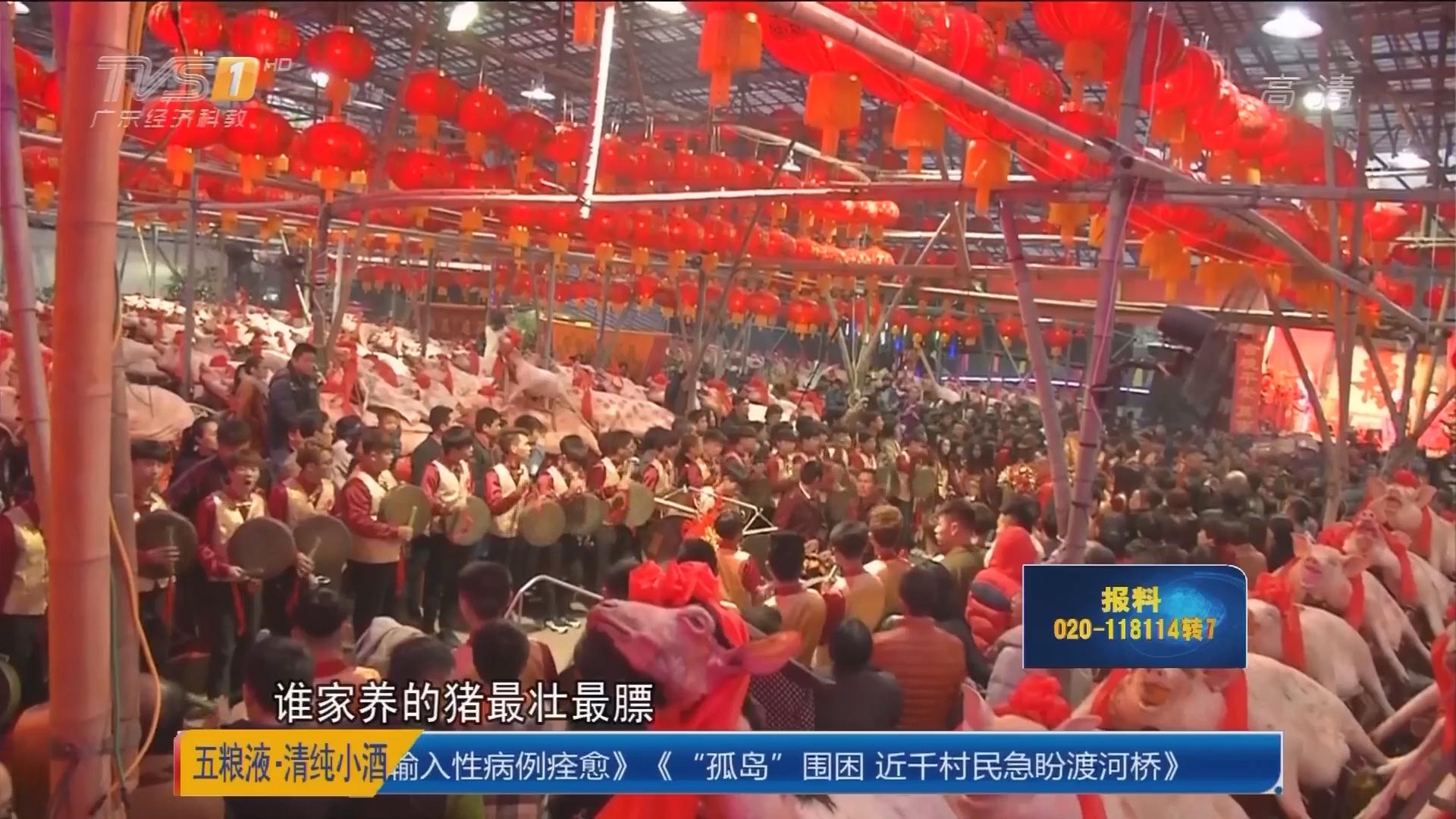 """汕头澄海:村民""""赛大猪""""庆丰年"""