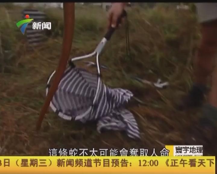 """""""與蛇共舞2:恐怖太攀蛇"""""""