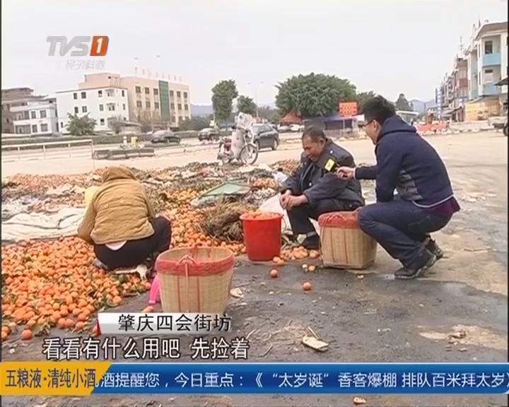 肇庆四会:沙糖桔滞销变质 商贩丢弃路边