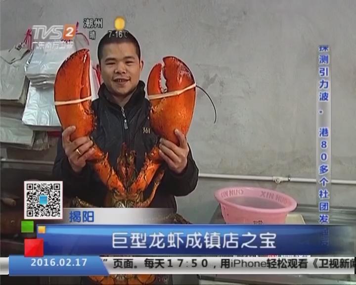 揭阳:罕见大龙虾身长1米2 钳大如钢剪