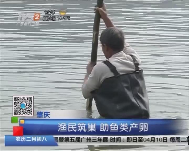 肇庆:渔民筑巢 助鱼类产卵