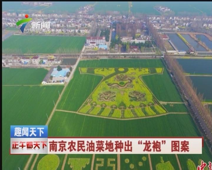 """南京农民油菜地种出""""龙袍""""图案"""