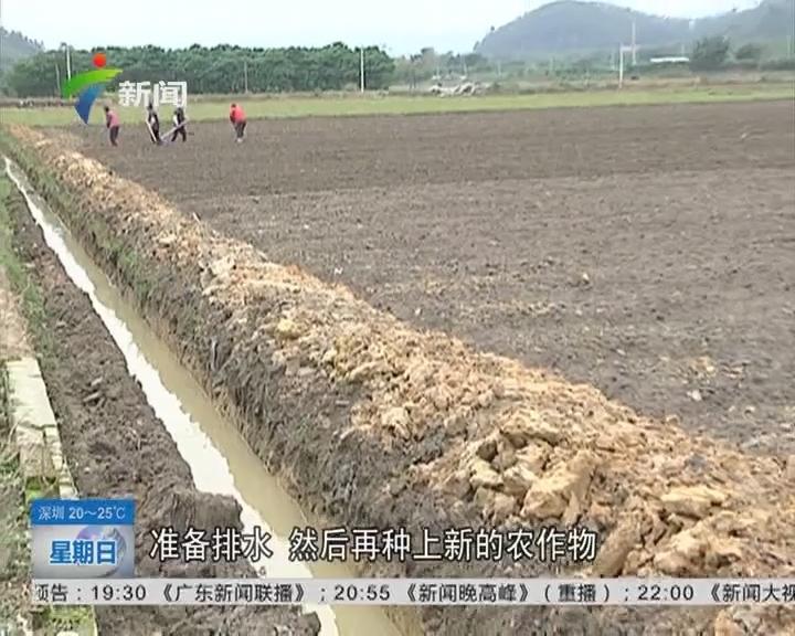 高峰关注:云浮农田被浸 农田被浸 村民损失惨重