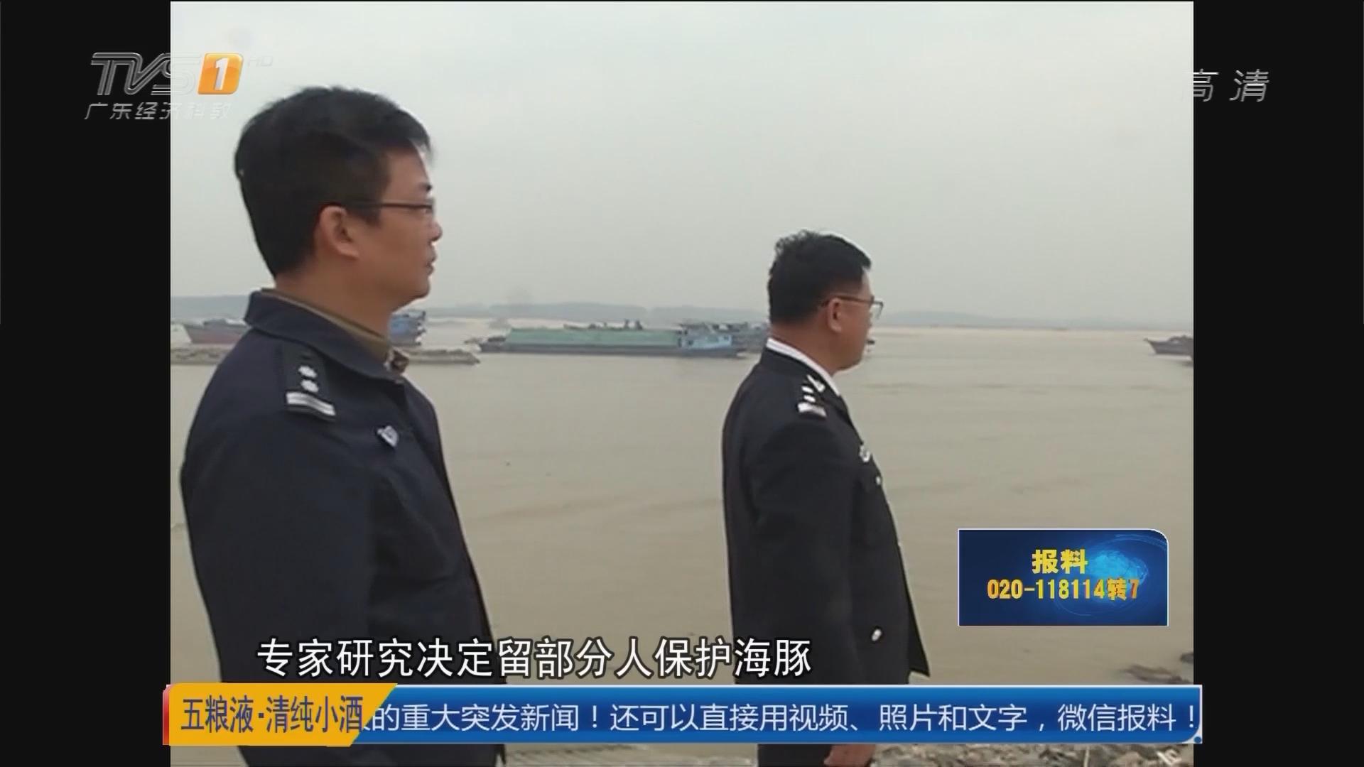 """清远石角镇北江清远段:迷路白海豚 水里捉起""""迷藏"""""""