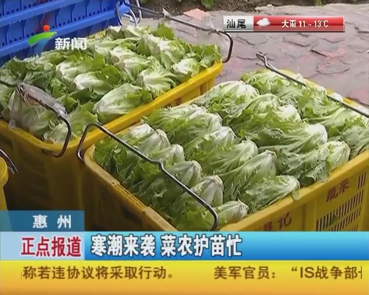 惠州:寒潮来袭 菜农护苗忙