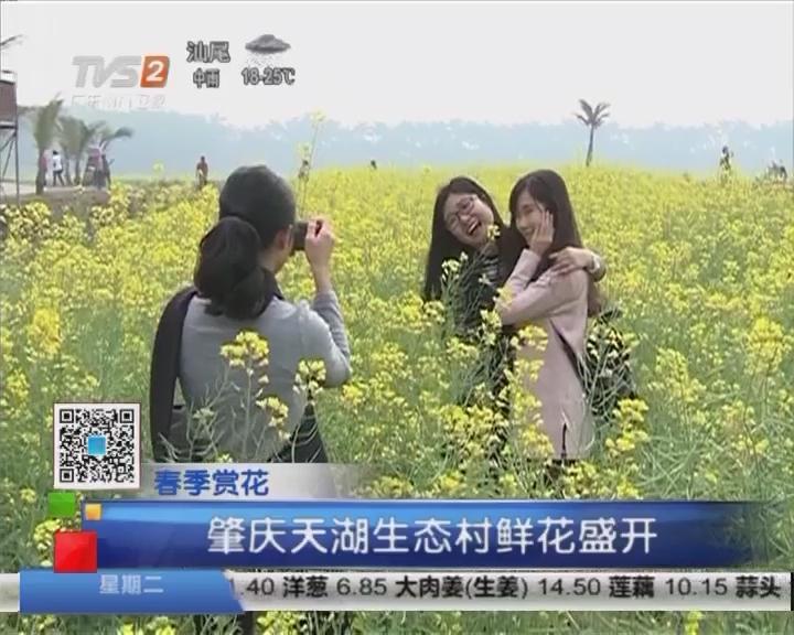 春季赏花:肇庆天湖生态村鲜花盛开