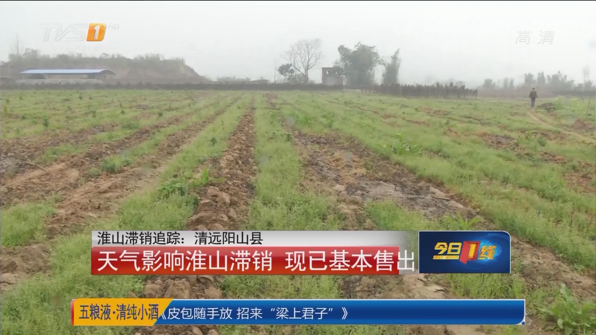 淮山滞销追踪:清远阳山县 天气影响淮山滞销 现已基本售出