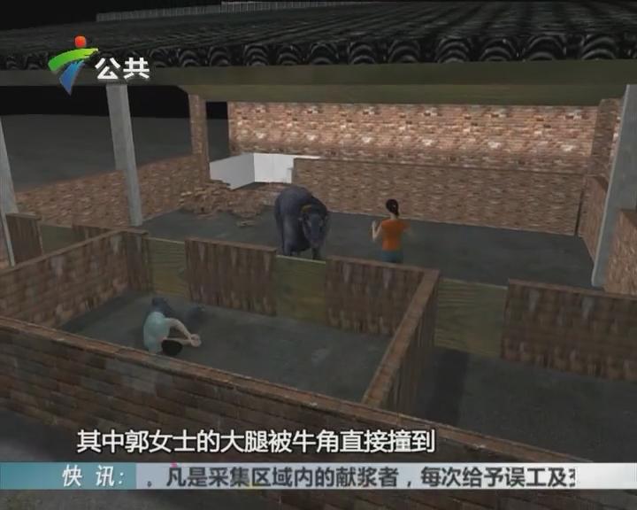 东莞:水牛发狂冲入村 撞伤两人被击毙