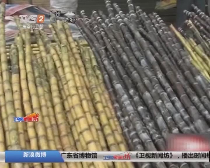 江门:甘蔗滞销 蔗农心急如焚