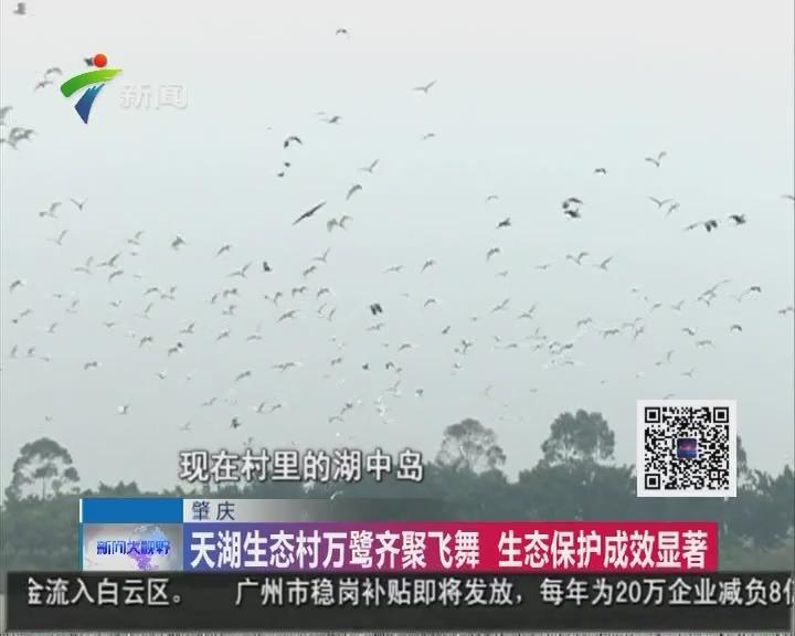 肇庆:天湖生态村万鹭齐聚飞舞 生态保护成效显著