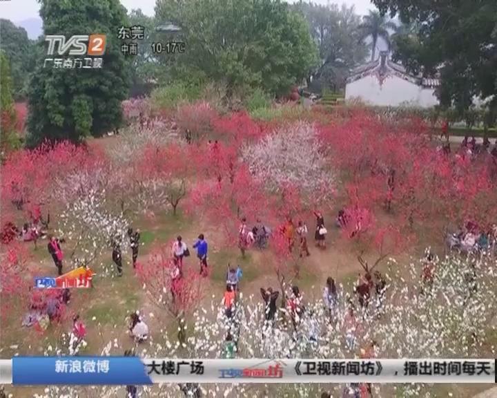 潮州:春暖桃花开 喜迎游人来