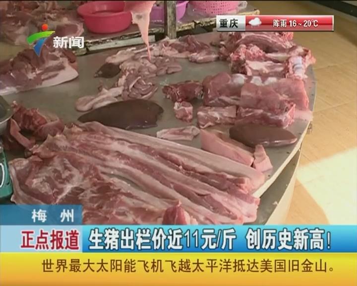 梅州:生猪出栏价近11元/斤 创历史新高!